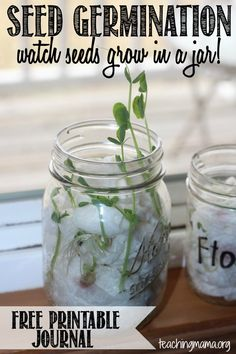 Seed Germination Activity -- Watch Seeds Grow in a Jar and record it in a free printable journal!