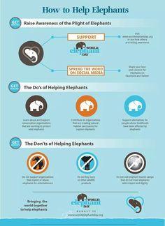 Save the elephants! !