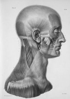 Facial Anatomy, Head Anatomy, Anatomy Poses, Anatomy Study, Body Anatomy, Anatomy Art, Anatomy Reference, Human Reference, Pose Reference