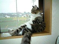 Taking a moment doesn't a thing but is so good for you..this cat's pose reminds me of my husband