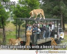 Amusing photo of a tourist group that's going to become food for the lions. These people have no idea how not strong these cages are