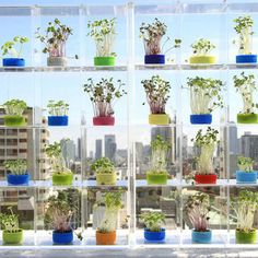 The Future of Food: 11 Unique Urban Farming Projects Urban Farming, Water Garden, Merry, Indoor, Table Decorations, Flowers, Projects, Green Ideas, Future