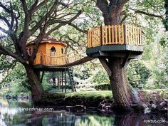 Amazing Tree Houses Around the World