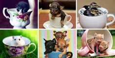 Cute critters in cups Cat Boarding, Animal Pictures, Cats And Kittens, Dog Food Recipes, Cups, Animals, Photography, Animais, Mugs