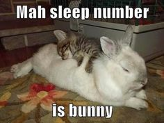 Yes....I love sleep number bunny :)
