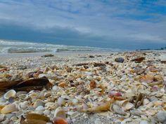 One of my favorite shelling beaches, Sanibel Island, Florida