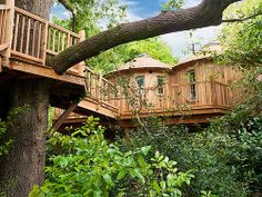 This tree house in the UK is for rent as vacation home...