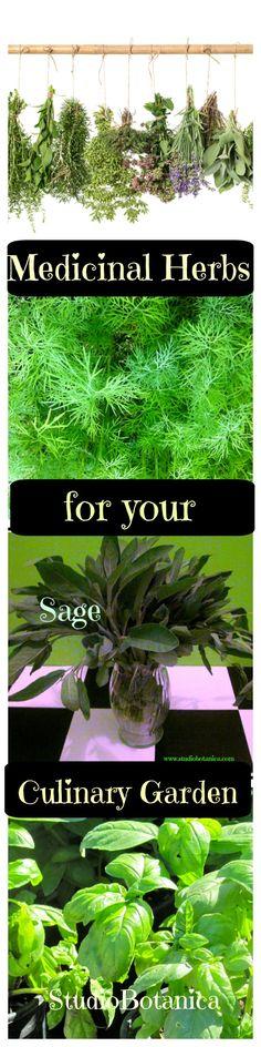 Top 10 Easy-to-Grow Medicinal Herbs for your Culinary garden - Studio Botanica