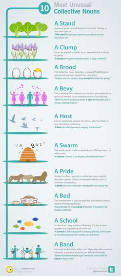 Collective Nouns!