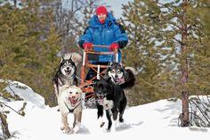 huskytrack: Hundeschlitten Reisen: huskytrack, der Spezialreiseveranstalter für Hundeschlitten-Touren und Hundeschlitten-Reisen in Lappland, Schweden, Finnland und Norwegen bietet Schnuppertouren mit Aufenthalt auf einer Huskyfarm, Tagestouren, bis hin zu Hundeschlittentouren von Hütte zu Hütte mit Expeditionscharakter. Weitere Informationen: http://www.pr4you.de/pressemeldungen.htm  http://www.huskytrack.de | http://www.pr4you.de | http://www.pr-agentur-tourismus.de_