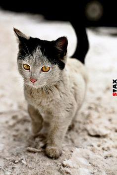 STAX | 25 állat, akikre irigykedni fogsz a szemük miatt