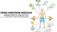 Cómo construir músculo: principios básicos