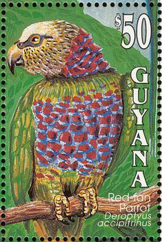 Red-fan Parrot stamps - mainly images - gallery format