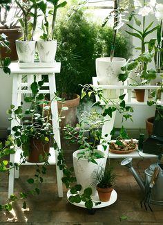 decoracion con plantas colgantes - Buscar con Google
