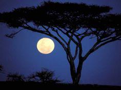 Acacia Tree in Moonlight, Tarangire, Tanzania