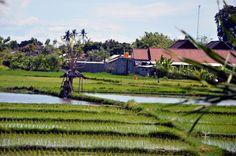 Merriedians Bali Rice Fields