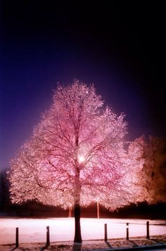 Pink nature light