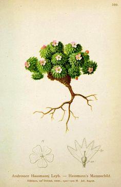 http://vintageprintable.com/wordpress/wp-content/uploads/2010/08/Botanical-Ground-cover-2.jpg