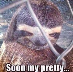 Sloth....