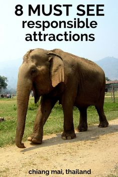 Want a responsible alternative to the Tiger Temple in Kanchanaburi or the Tiger Kingdom in Chiang Mai, Thailand? Here are eight harm-free attractions to try Thailand Adventure, Thailand Travel Tips, Phuket Thailand, Asia Travel, Adventure Travel, Temple Thailand, Chang Mai Thailand, Thailand Tiger, Wanderlust Travel