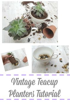 Vintage teacup planters tutorial http://www.hometalk.com/l/UOZ