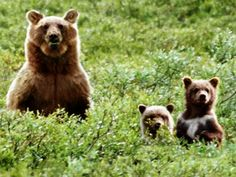 I'm a mama grizzly!! :)