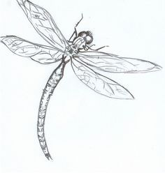 1000 Ideas About Dragonfly Drawing On Pinterest