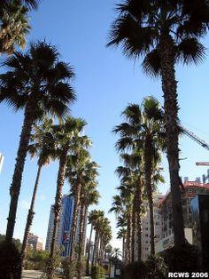 Long Beach, California and Laguna Beach, Huntington Beach, Muscle Beach 2012 (baseball for Brandon - ESPN TX Rangers Team) Long Beach California, California Travel, Southern California, Places To Travel, Places To See, Santa Monica, Wanderlust, San Diego, Huntington Beach