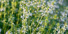 Τα αρωματικά φυτά πρέπει να συγκομίζονται ηλιόλουστες μέρες και ποτέ όταν ο καιρός είναι βροχερός, καθώς τα άνθη και τα φύλλα δεν πρέπει να έχουν πάνω τους υγρασία γιατί μπορεί να σαπίσουν. Herbs, Garden, Flowers, Plants, Jars, Lawn And Garden, Garten, Herb, Gardens