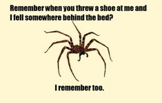 Girlfriend said she missed killing a spider when she threw a shoe at it above the couch. I sent her this.