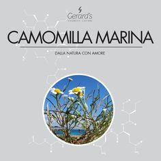 La Camomilla Marina è un fiore selvatico, con un'azione decongestionante e lenitiva. È presente nelle nostra linea Aquasense, una riserva d'acqua vitale per la bellezza della pelle normale, secca o delicata.  #nature is #inspiring #natura è #ispirazione #beauty #bellezza #skincare #camomillamarina #scentlesschamomile #gerards #cosmeticculture #madeinitaly