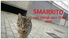 Smarrito Tigrotto, gatto maschio di un anno e mezzo circa. Zona Caserma Giulio Cesare Rimini. Se lo vedete vi prego di chiamarmi al numero 349 5303765 Carolina Grazie.