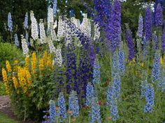 høstblomstrende stauder for Cold Climate Gardening, Diy Planters, Flower Beds, Beautiful Gardens, 50th, Flowers, Plants, Angel, Garden Ideas