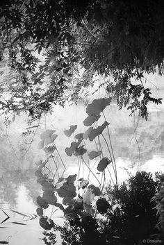 Photography, Digital in Nature, Vegetal, Flower, plant, ---------------------------------------------------  naissance dans la boue épanouissement au soleil éveil dans un rêve … - Image #533060