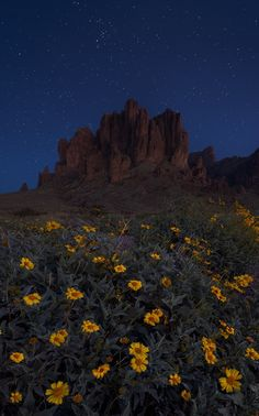 Stars Over Dutchman by Brandon  Lyons  on 500px. Arizona