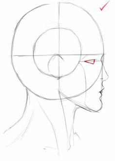 Head. Side view.