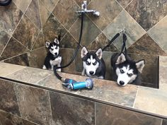 Bath time pups