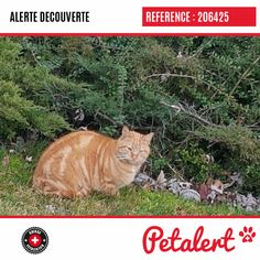 04.02.2020 / Chat / LausanneVaud / Suisse Cats, Switzerland, Dog, Animaux, Gatos, Cat, Kitty, Kitty Cats