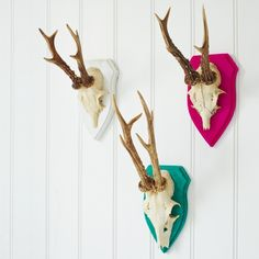 Antler - his European mount on the wall?