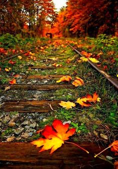 Fall leaves on train tracks