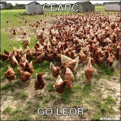 Tá mé CEARC go leor! Irish Memes, Gaelic Words, Irish Language, Haha, Ireland, Education, Puns, School, Celtic