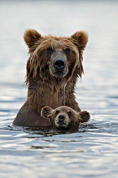 Momma bear with cub taking a swim