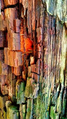 Natural Structures, Texture Art, Natural Texture, Abstract Photography, Amazing Nature, Textures Patterns, Color Mixing, Tree Bark, Inspiration