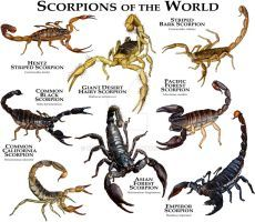 Scorpions of the World by rogerdhall