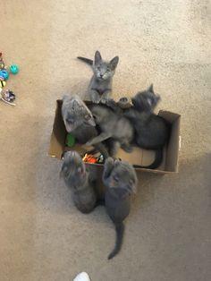 Foster Kittens, Kangaroo, The Fosters, Animals, Baby Bjorn, Animales, Animaux, Animal, Animais