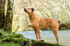 Jack and the river .. #cute #dog #animal #pet #chien #river #forest Discover more photos of Jack HERE ==> https://fr.yummypets.com/pets/149391