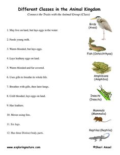 Animal Classification Printables | English Worksheets, Activities ...
