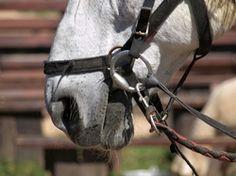 So wird der Sattel an das Pferd angepasst...