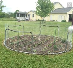 an old trampoline to create a neat vegetable garden. The base of the trampoline acts as good support for wire fencing or netting to prevent unwanted intruders from invading. Trampolines, Recycled Trampoline, Backyard Trampoline, Garden Fencing, Garden Beds, Tire Garden, Garden Junk, Veg Garden, Glass Garden
