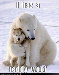 i has a teddy woof  (wolf)  - Google Search